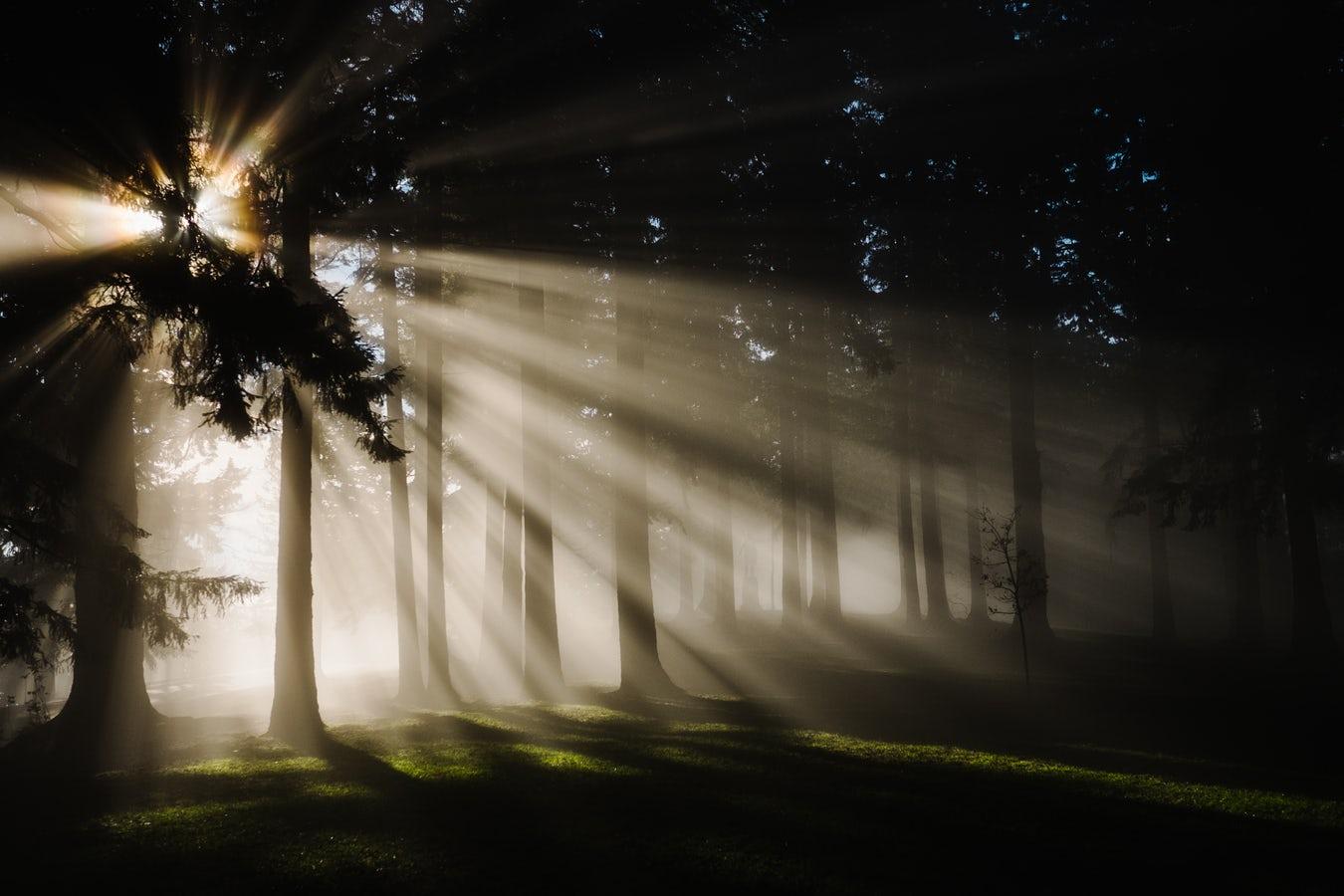 Free Spirit Guidance Online